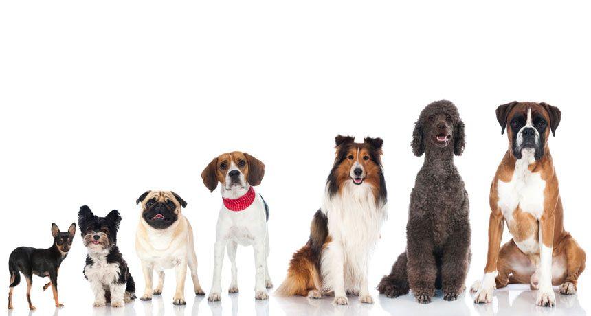 Vrbovec: Grad će vlasnicima financirati mikročipiranje i sterilizaciju pasa