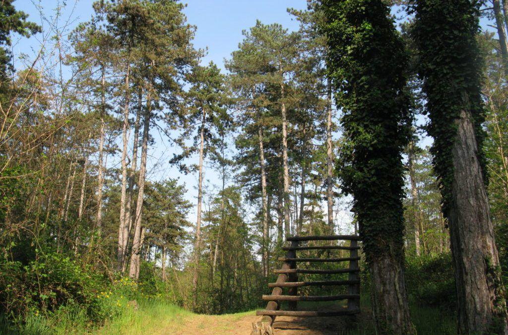 Đurđevac: Novi turistički sadržaji u Park šumi Borik – Grad prijavio projekt izgradnje šetnice i vidikovca u krošnjama