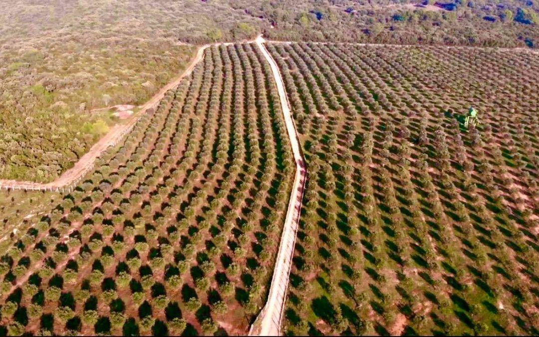 Mali Lošinj: 445 tisuća kuna potpora poduzetnicima i poljoprivrednicima