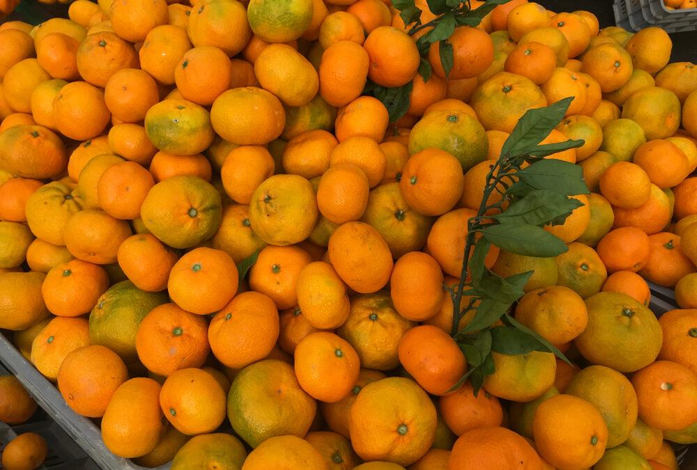 Poziv gradovima iz Dubrovačko-neretvanske županije: Omogućite neretvanskim proizvođačima besplatan plasman i prodaju mandarina
